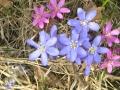 Kevät ja kukat 003