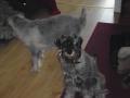 Koirat ja Minni 003