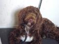 Koirat ja Mytty 003