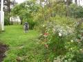 Missä koiraluuraa sateessa 017