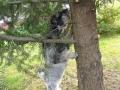 Orava puussa ja hampaat 001