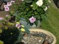 kesä ja kukat 2014 002