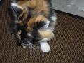 Eevi, Emma ja Nuppu-kissa 003