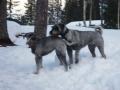 Koirat ja Kajaani 016