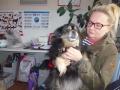 Koirat ja Minni 004