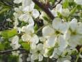 Kukat, Mikki ja Eevi ym 003