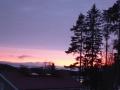 Mäntyjä ja ilta-aurinko 004