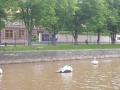 Turku, kasvit ja sänky 017