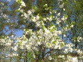 kukkia jakoiruuksia 002