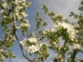 kukkia jakoiruuksia 020